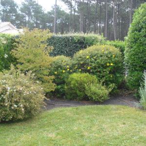 Arbustes vivaces